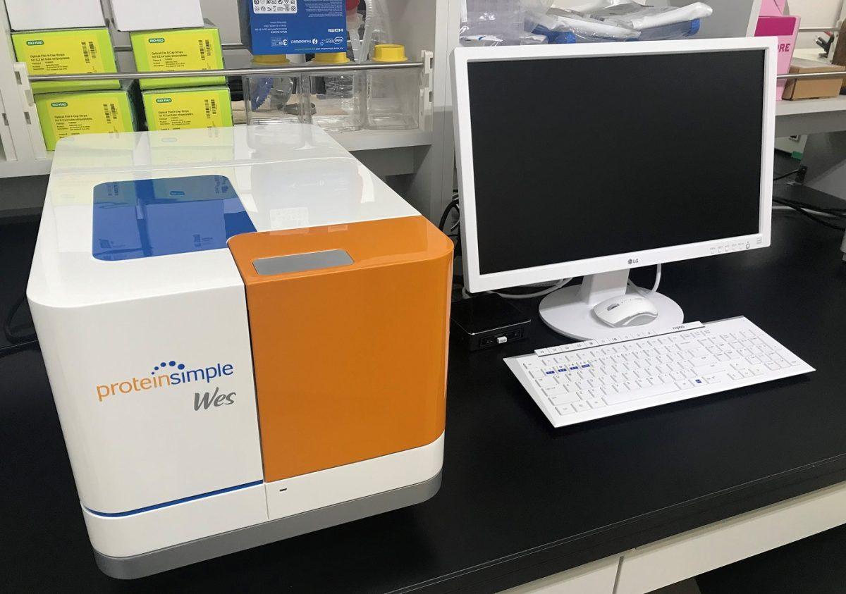 Wesタンパク質解析装置を新規導入しました。